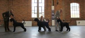 Giant dog winners