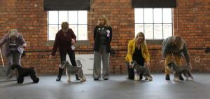 Mini dog winners