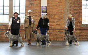 Standard dog winners